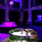 Art Aquarium Milano 2015